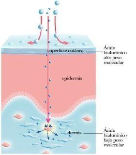 acido hialuronico peso molecular